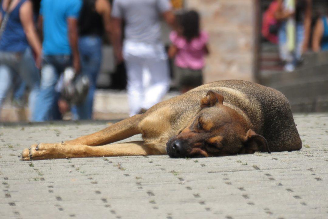 Maltrato animalAnimalistas entregan al Congreso 1,5 millones de firmas para un Pacto de Estado contra el maltrato animal
