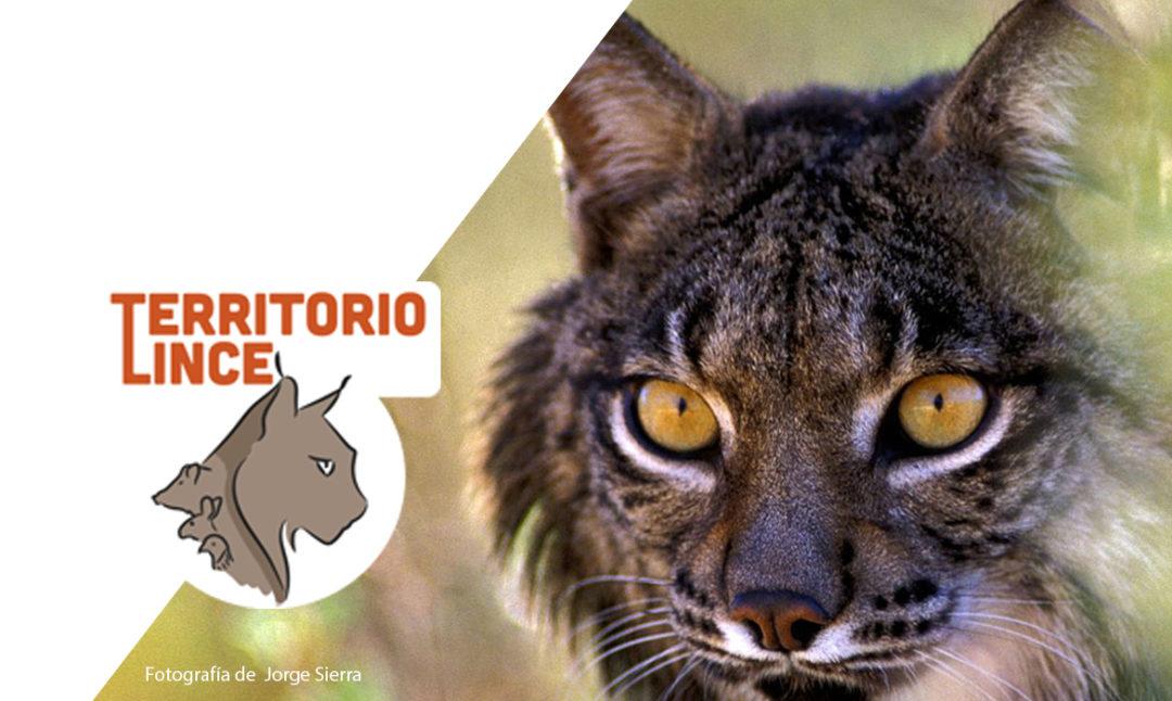 Naturaleza'Territorio lince': la iniciativa de WWF que nos permite ver las 24 horas a la naturaleza salvaje ibérica desde casa