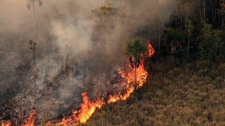 BrasilPantanal, uno de los biomas más importante del planeta hecho cenizas